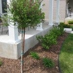 Another Non-Frugal Expense: Landscaping Today