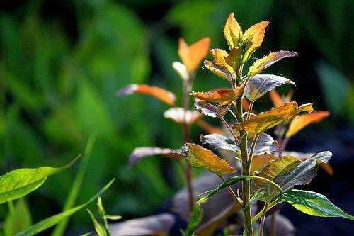 nc_plants