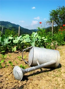Grow Your Own Food Garden