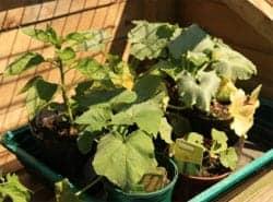 retirement-and-gardening