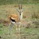 Is Gazelle Intensity A Long-Term Strategy For Staying Debt Free?